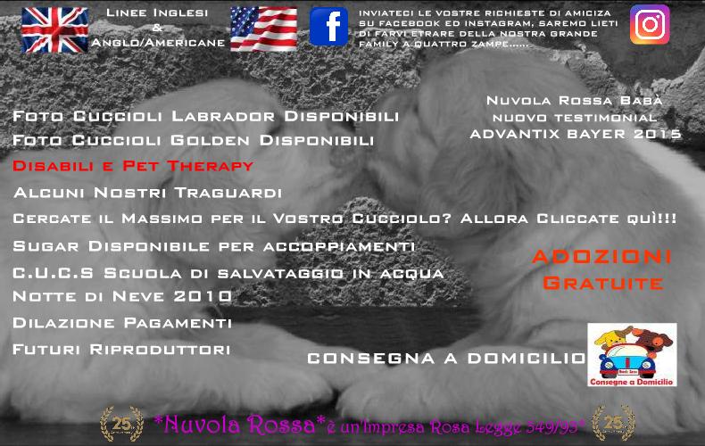 Nuvola Rossa Golden Retriever Labrador Retriever Roma Valmontone